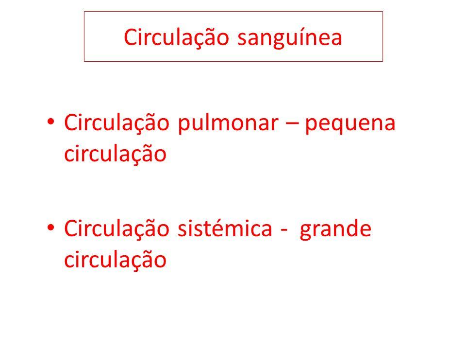 Circulação sanguínea Circulação pulmonar – pequena circulação.