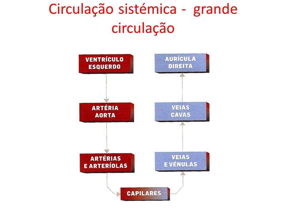 Circulação sistémica - grande circulação