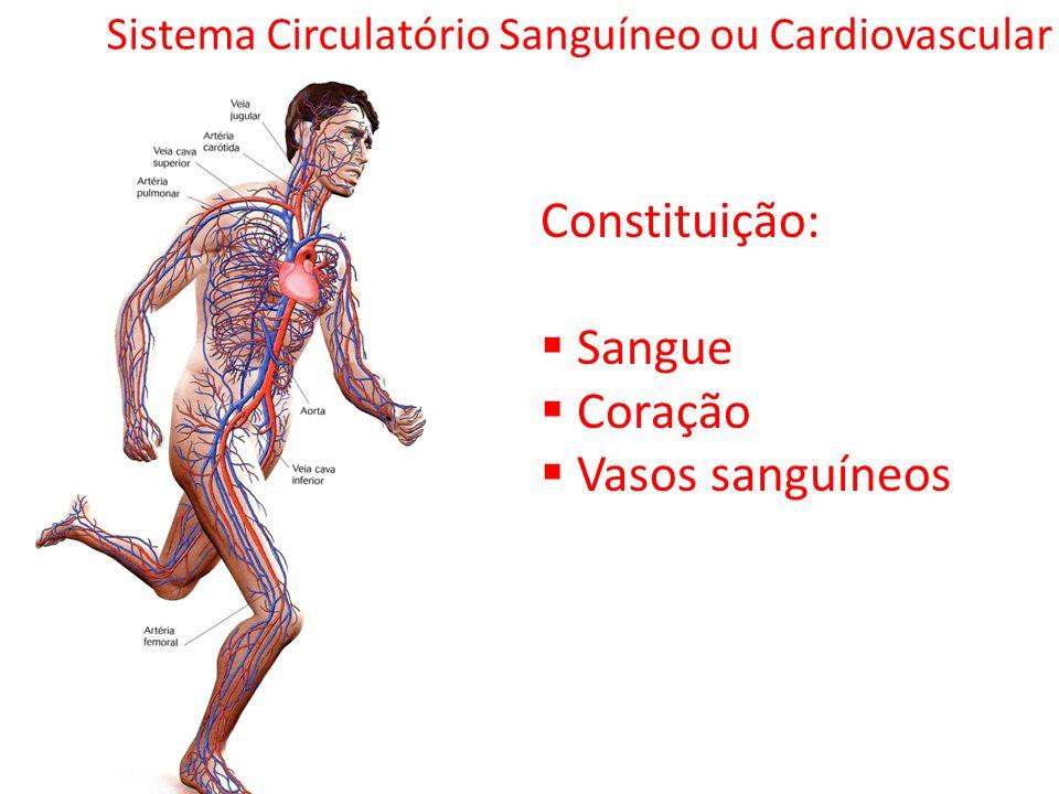 Sistema Circulatório Sanguíneo ou Cardiovascular