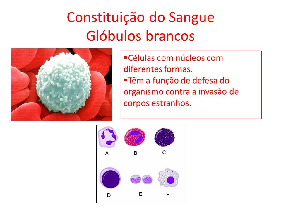 Constituição do Sangue Glóbulos brancos