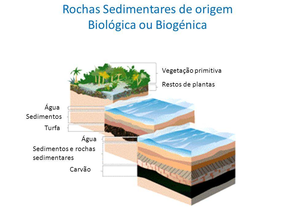 Rochas Sedimentares de origem Biológica ou Biogénica