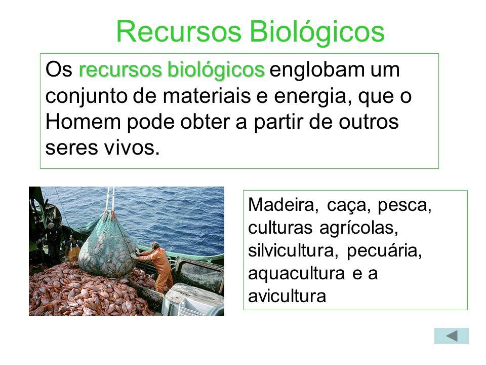 Recursos Biológicos Os recursos biológicos englobam um conjunto de materiais e energia, que o Homem pode obter a partir de outros seres vivos.