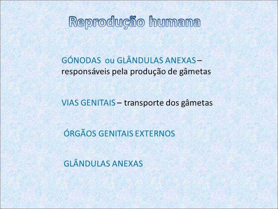 Reprodução humana GÓNODAS ou GLÂNDULAS ANEXAS – responsáveis pela produção de gâmetas. VIAS GENITAIS – transporte dos gâmetas.