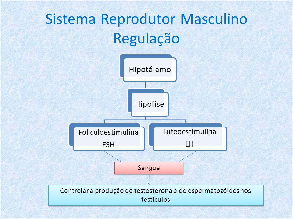 Sistema Reprodutor Masculino Regulação