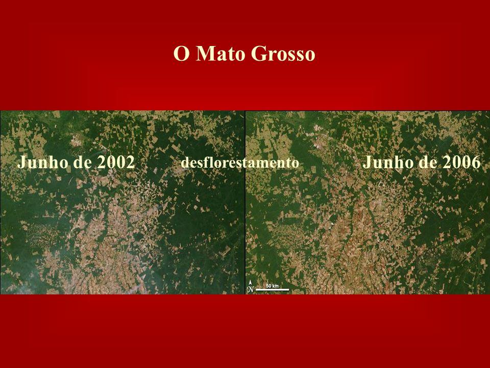 O Mato Grosso Junho de 2002 Junho de 2006 desflorestamento