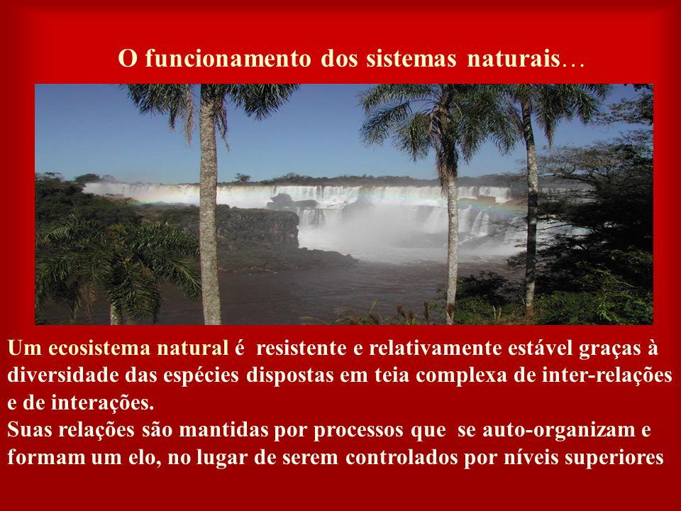 O funcionamento dos sistemas naturais…