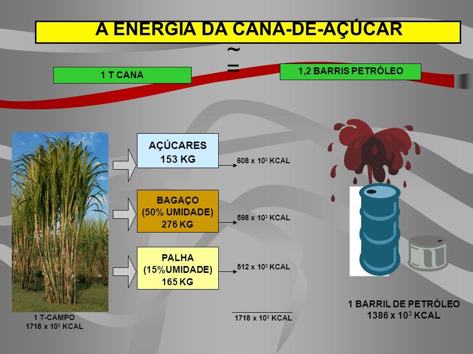 A ENERGIA DA CANA-DE-AÇÚCAR