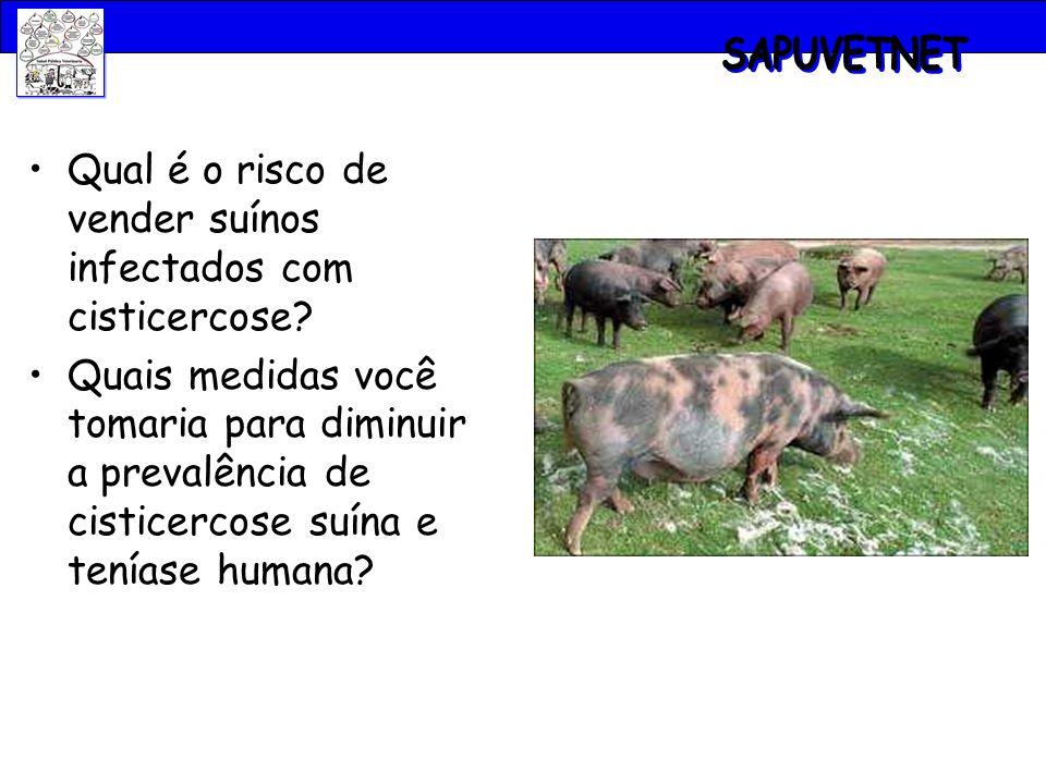 SAPUVETNET Qual é o risco de vender suínos infectados com cisticercose
