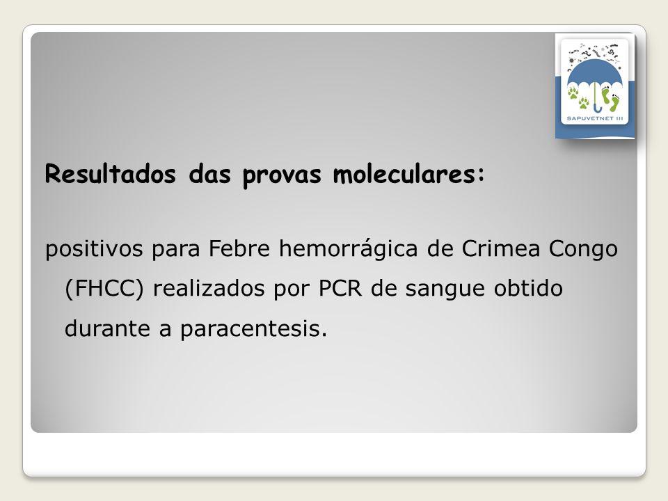 Resultados das provas moleculares: