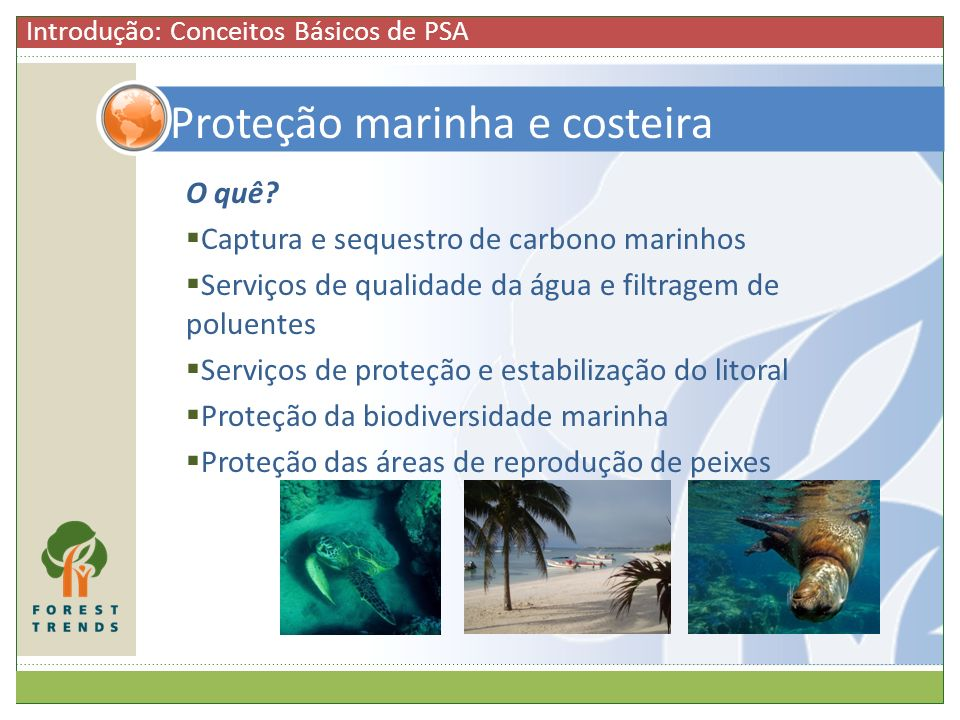 Proteção marinha e costeira