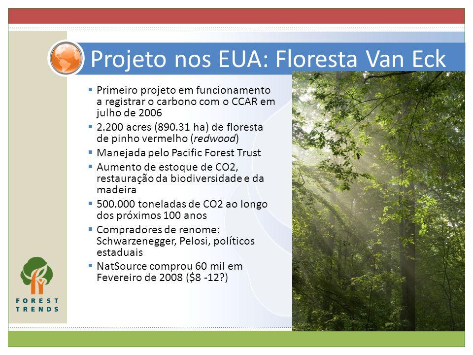 Projeto nos EUA: Floresta Van Eck