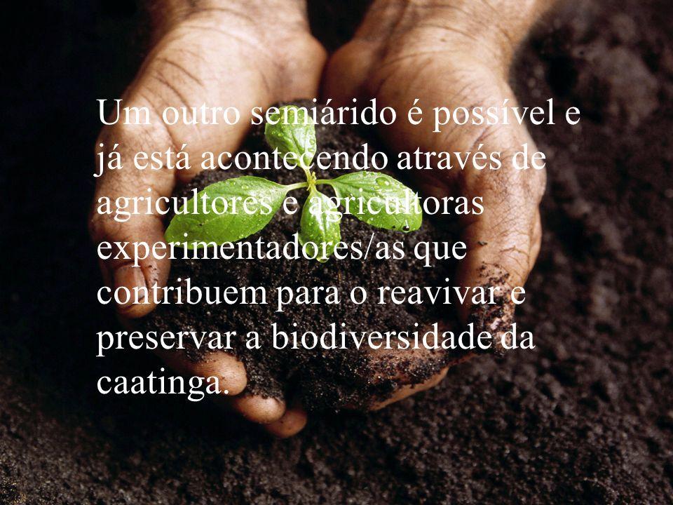 Um outro semiárido é possível e já está acontecendo através de agricultores e agricultoras experimentadores/as que contribuem para o reavivar e preservar a biodiversidade da caatinga.