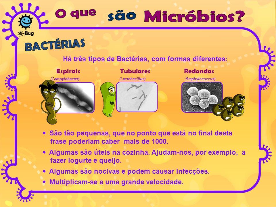 Há três tipos de Bactérias, com formas diferentes: