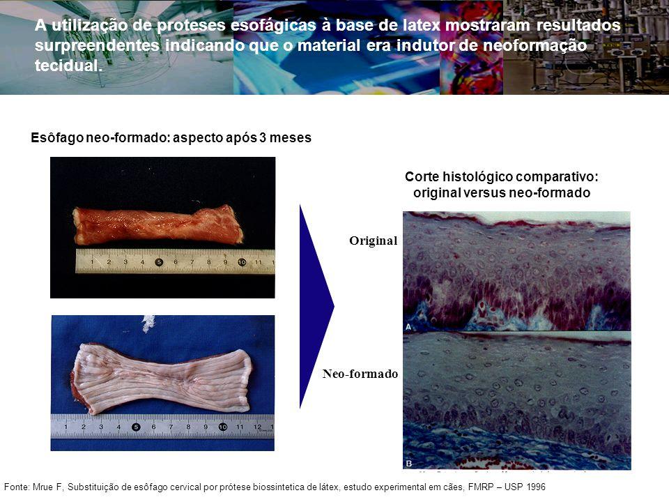 Corte histológico comparativo: original versus neo-formado