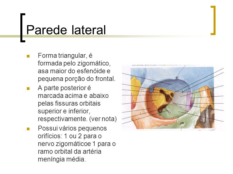 Parede lateral Forma triangular, é formada pelo zigomático, asa maior do esfenóide e pequena porção do frontal.