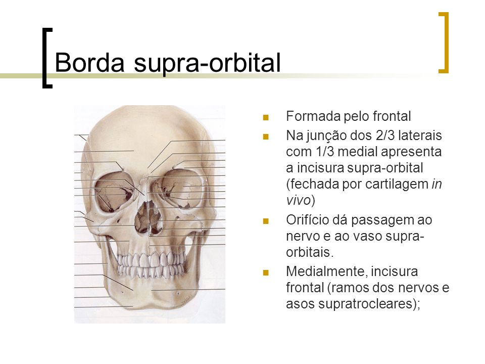 Borda supra-orbital Formada pelo frontal