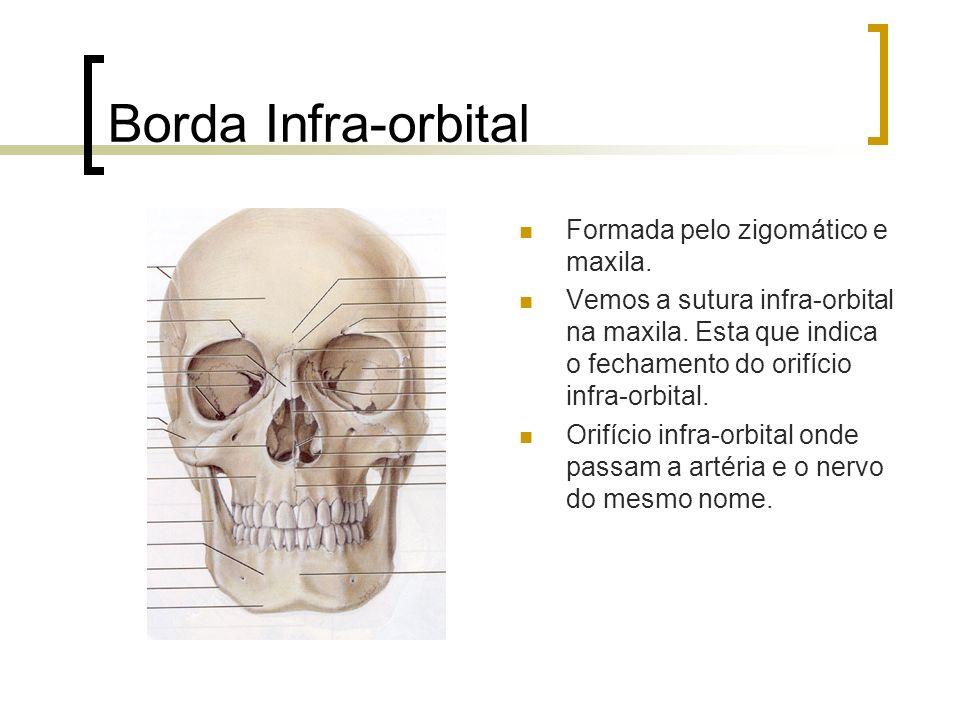 Borda Infra-orbital Formada pelo zigomático e maxila.