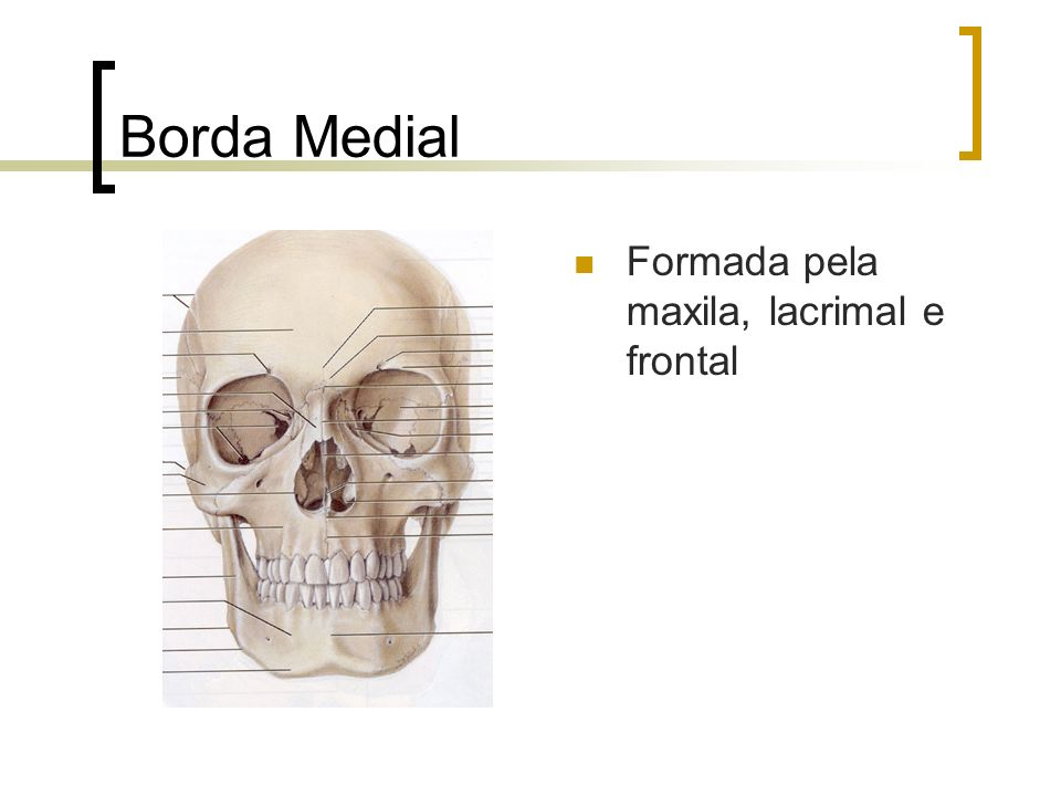 Borda Medial Formada pela maxila, lacrimal e frontal