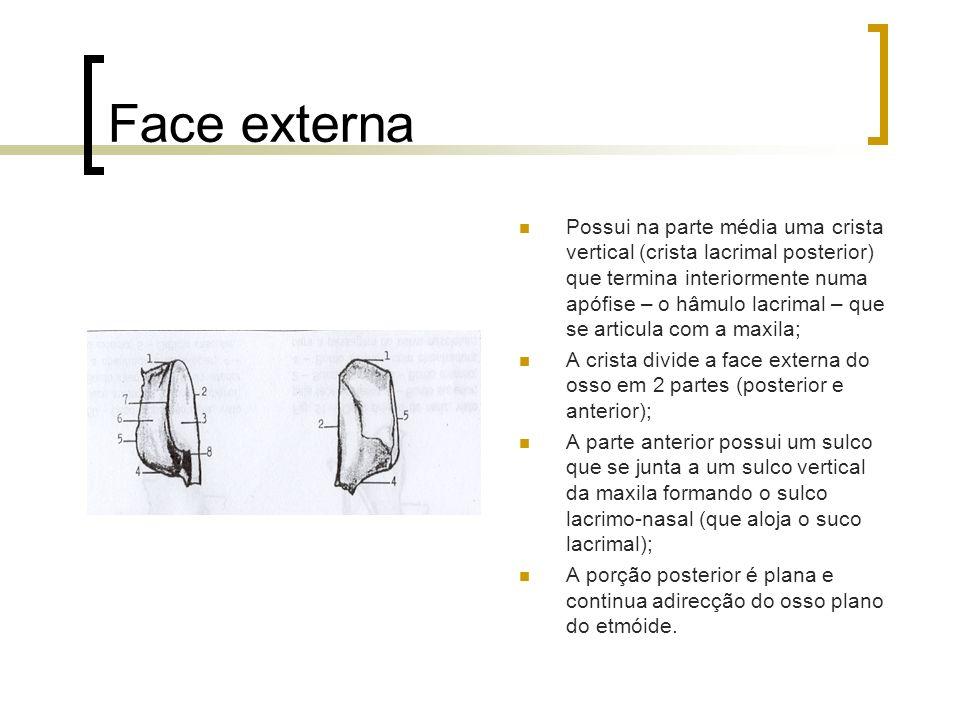 Face externa