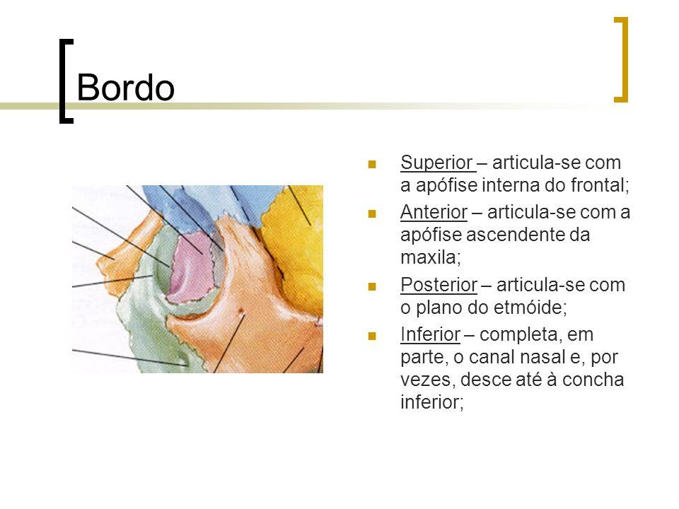 Bordo Superior – articula-se com a apófise interna do frontal;