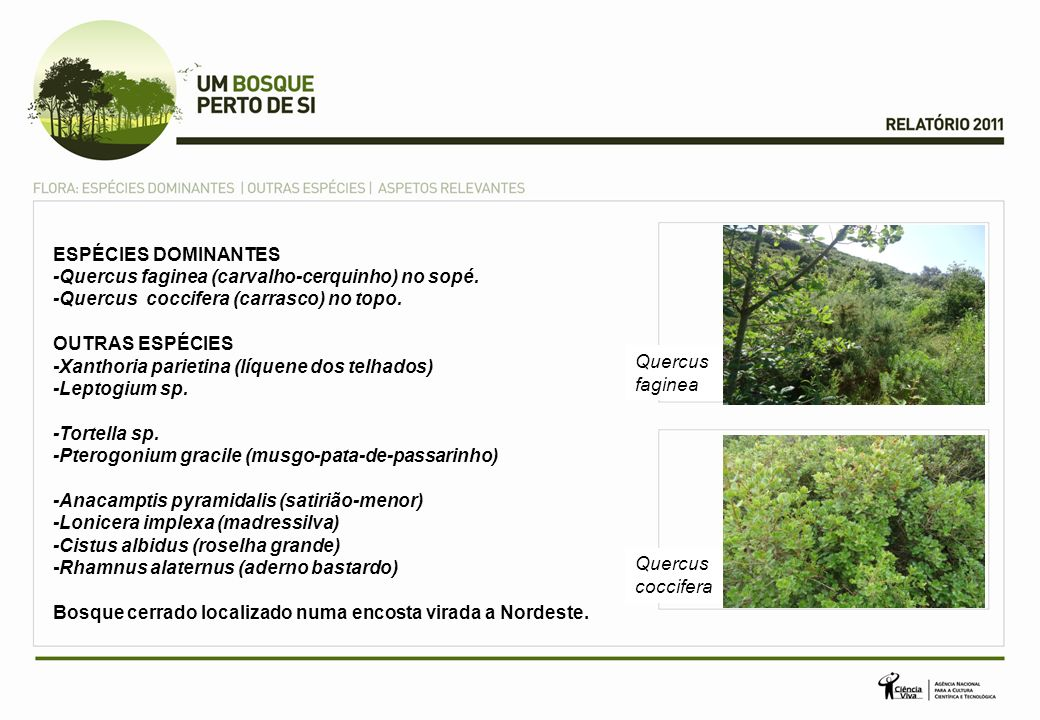 ESPÉCIES DOMINANTES -Quercus faginea (carvalho-cerquinho) no sopé. -Quercus coccifera (carrasco) no topo.