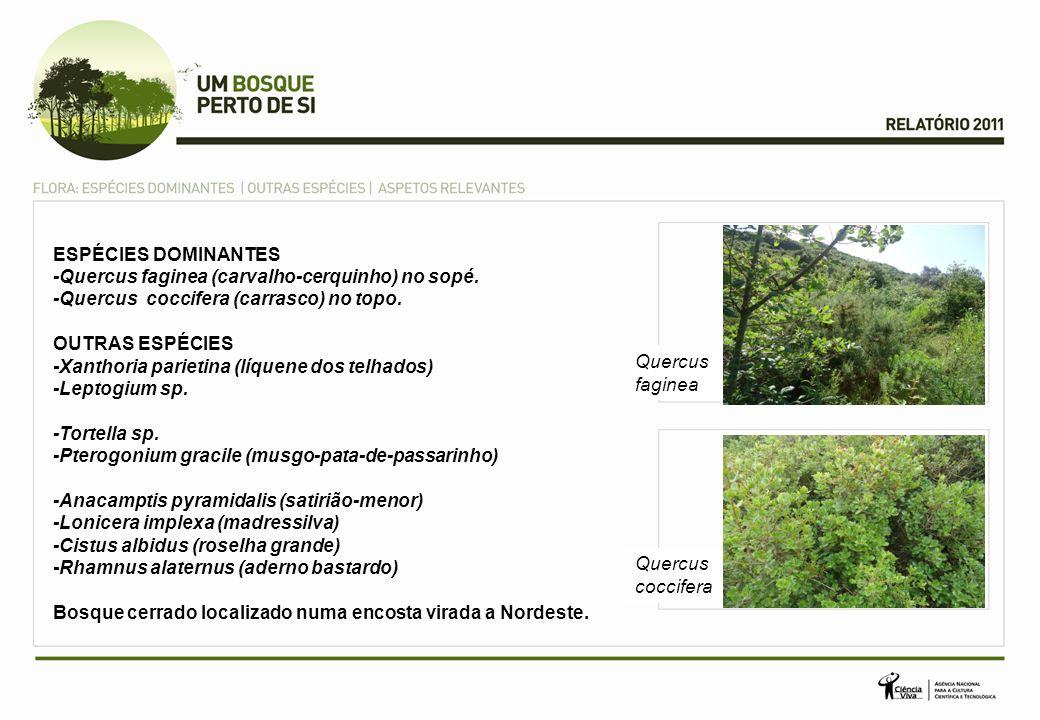 ESPÉCIES DOMINANTES-Quercus faginea (carvalho-cerquinho) no sopé. -Quercus coccifera (carrasco) no topo.