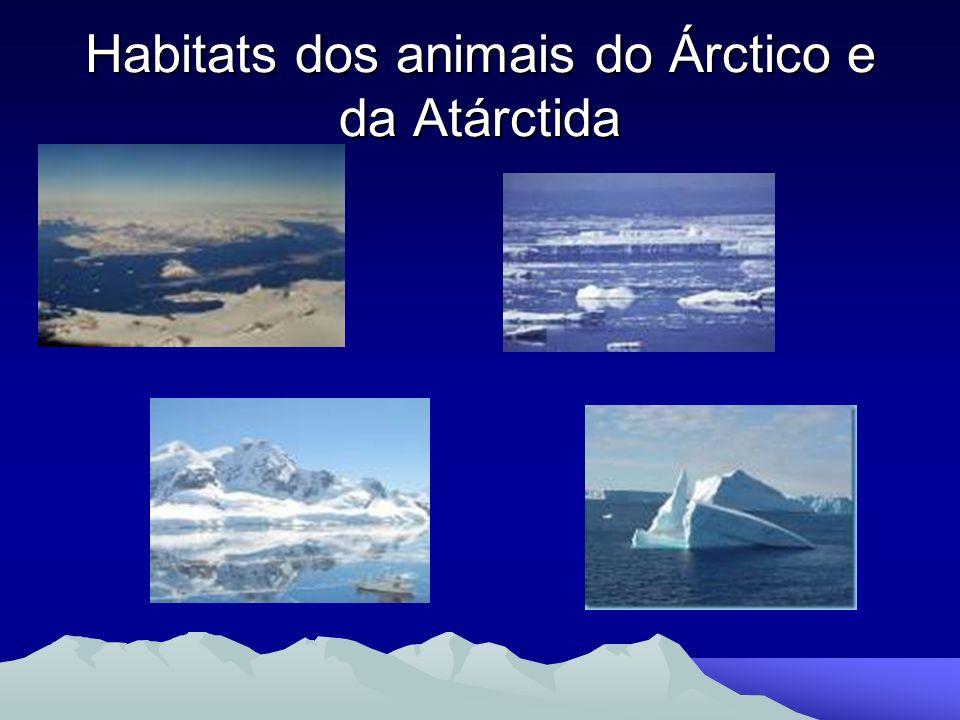 Habitats dos animais do Árctico e da Atárctida