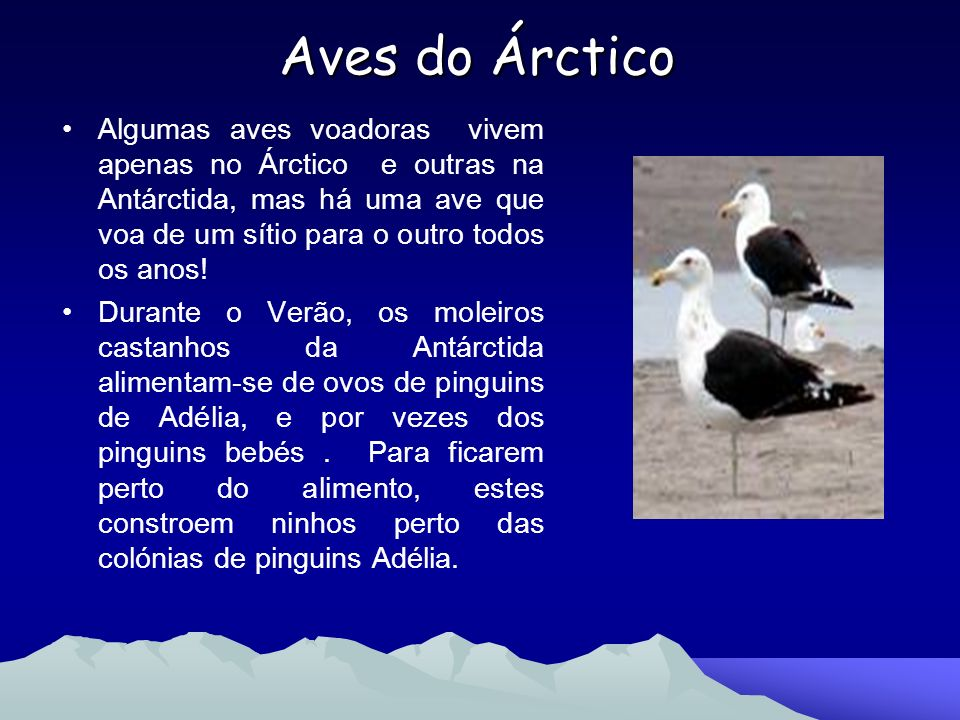 Aves do Árctico