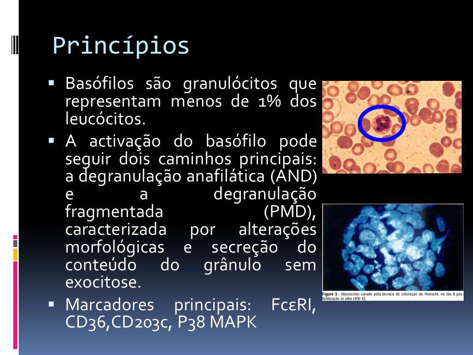 Princípios Basófilos são granulócitos que representam menos de 1% dos leucócitos.