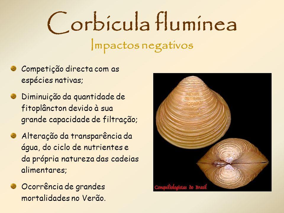 Corbicula fluminea Impactos negativos