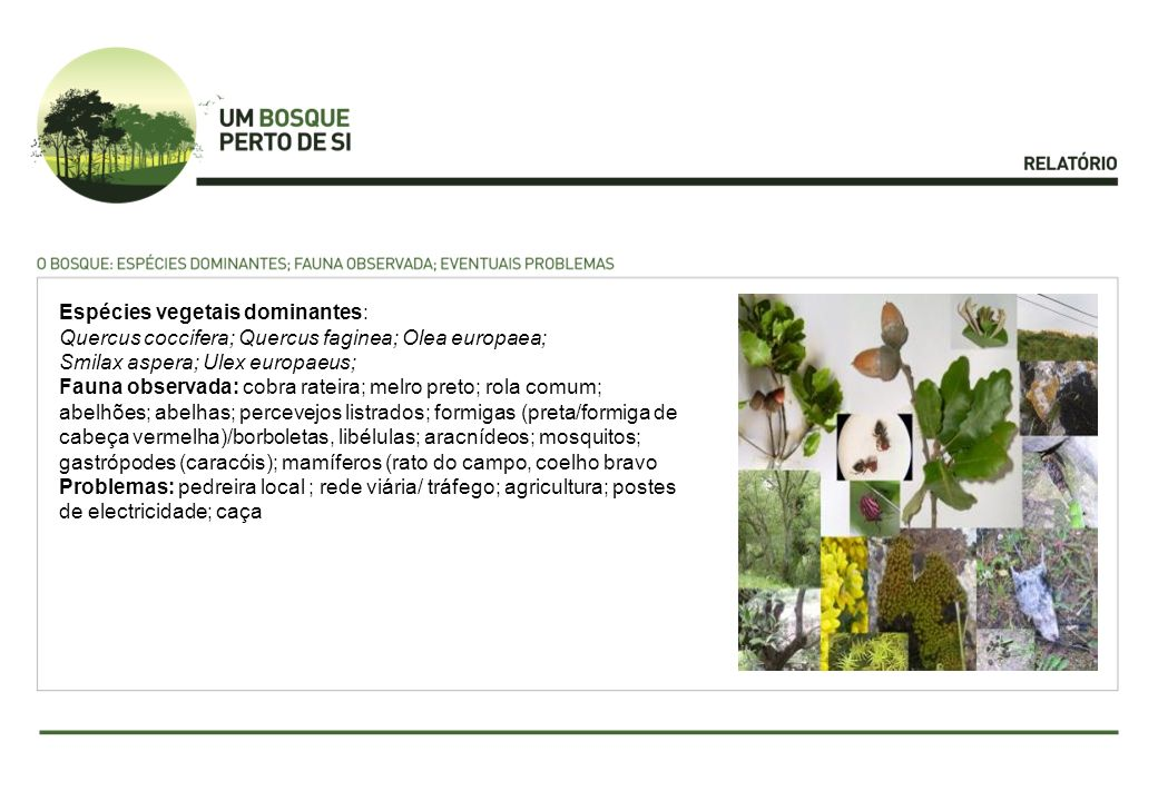 Espécies vegetais dominantes: