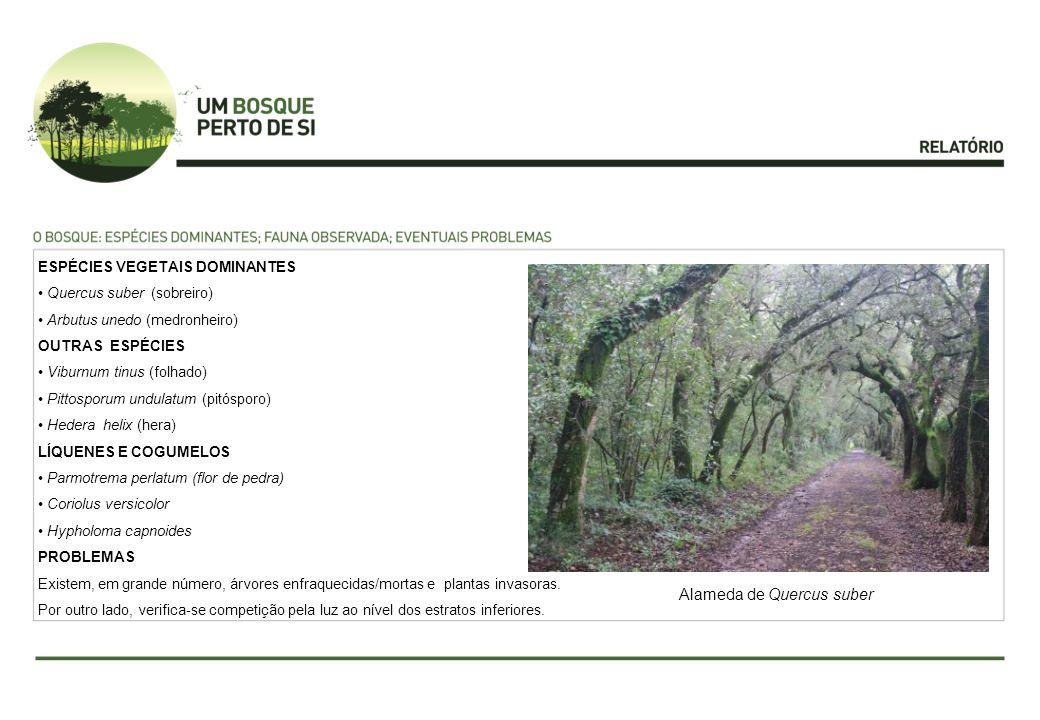 Alameda de Quercus suber