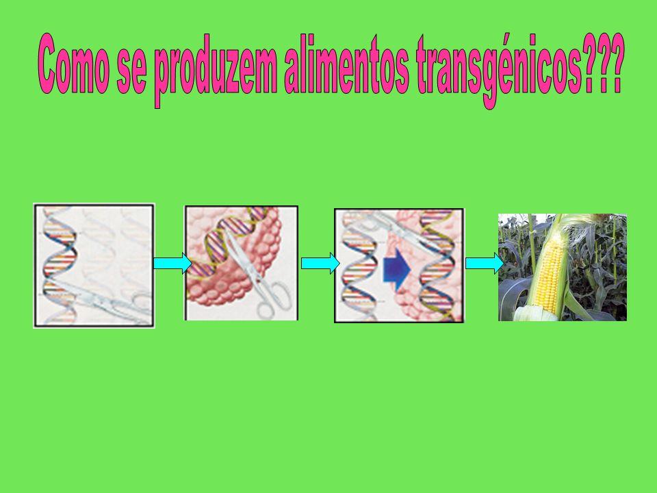Como se produzem alimentos transgénicos