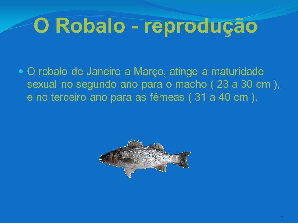 O Robalo - reprodução
