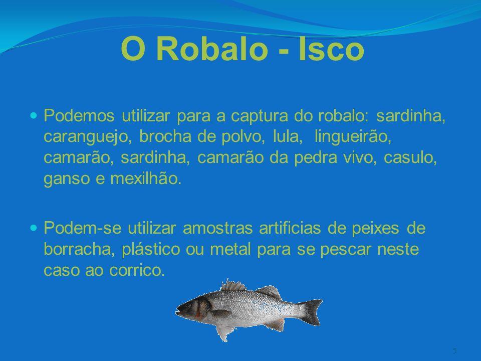 O Robalo - Isco
