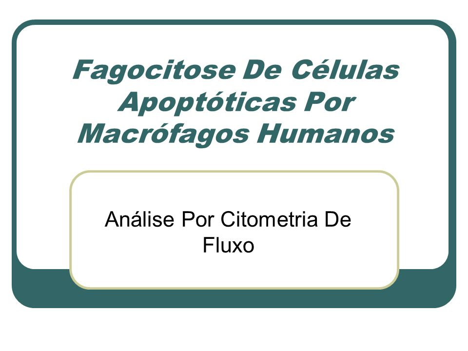 Fagocitose De Células Apoptóticas Por Macrófagos Humanos