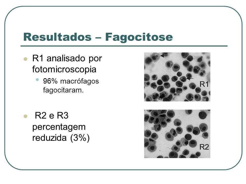 Resultados – Fagocitose