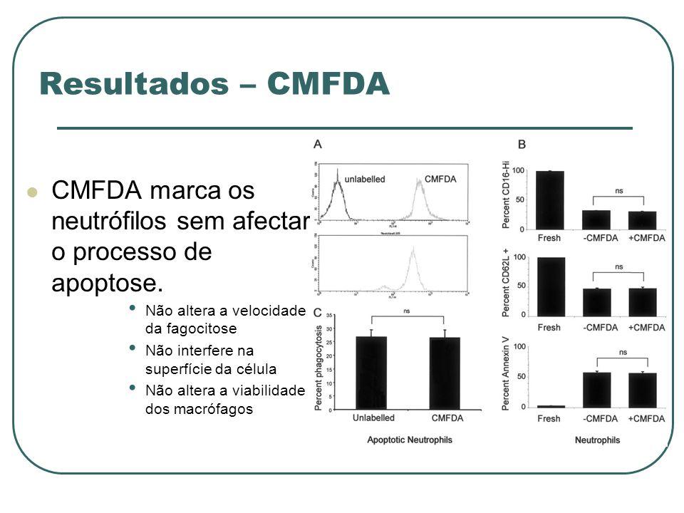 Resultados – CMFDA CMFDA marca os neutrófilos sem afectar o processo de apoptose. Não altera a velocidade da fagocitose.
