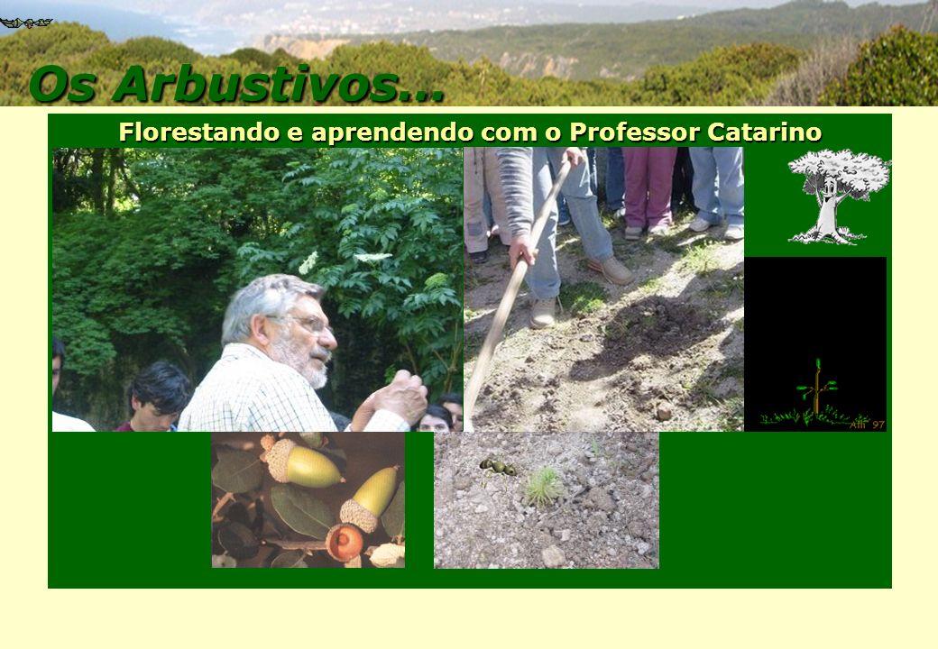 Florestando e aprendendo com o Professor Catarino