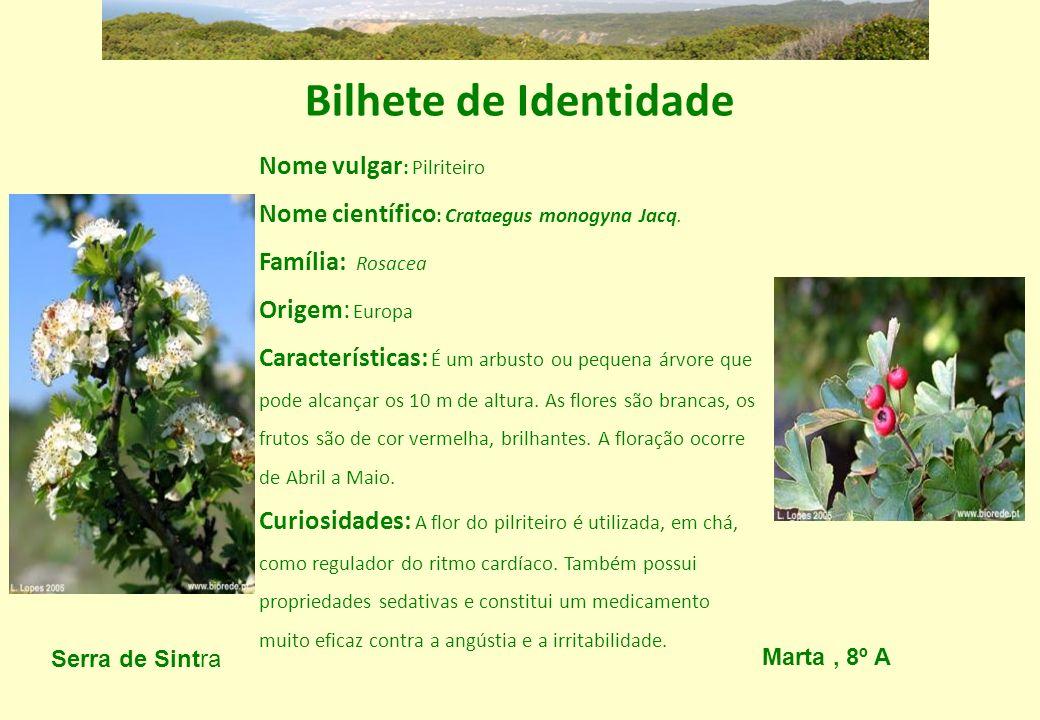Bilhete de Identidade Nome vulgar: Pilriteiro Nome científico: Crataegus monogyna Jacq. Família: Rosacea.