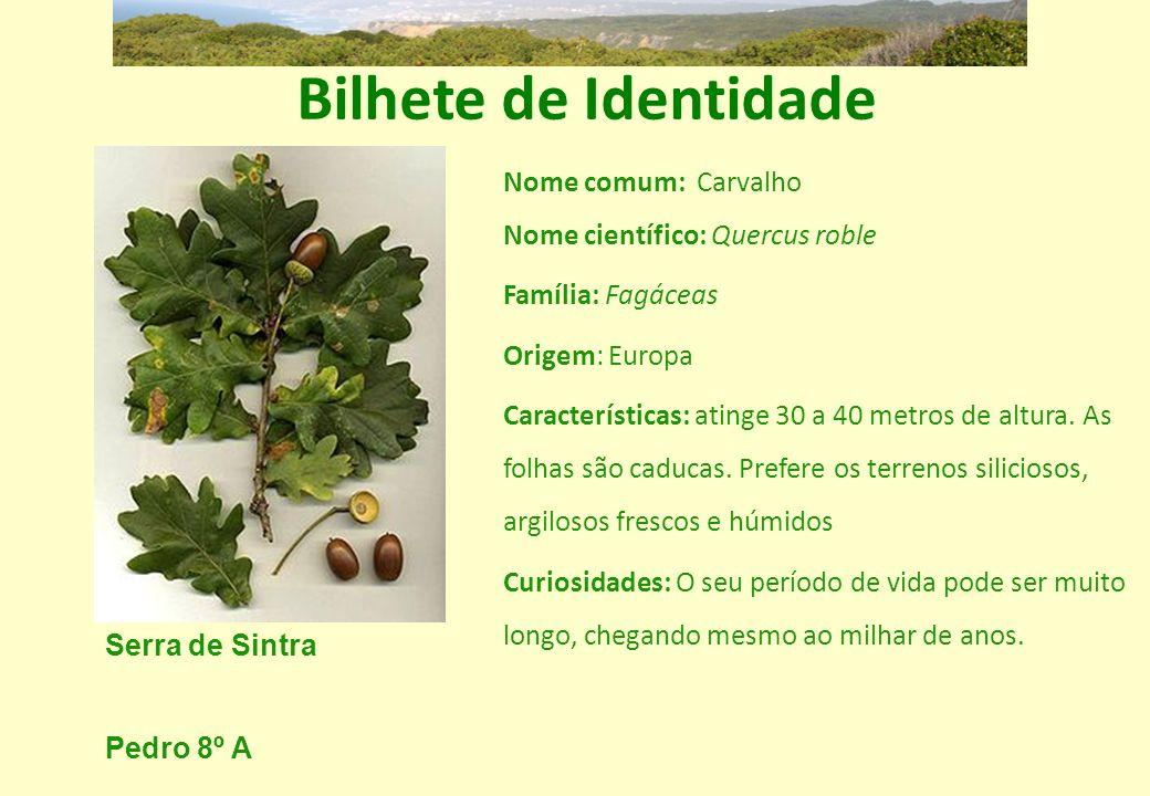 Bilhete de Identidade Nome comum: Carvalho Nome científico: Quercus roble. Família: Fagáceas. Origem: Europa.