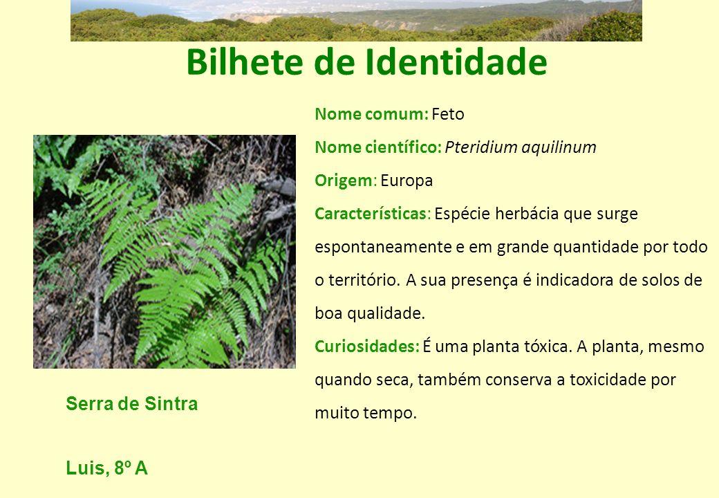 Bilhete de Identidade Nome comum: Feto Nome científico: Pteridium aquilinum. Origem: Europa.