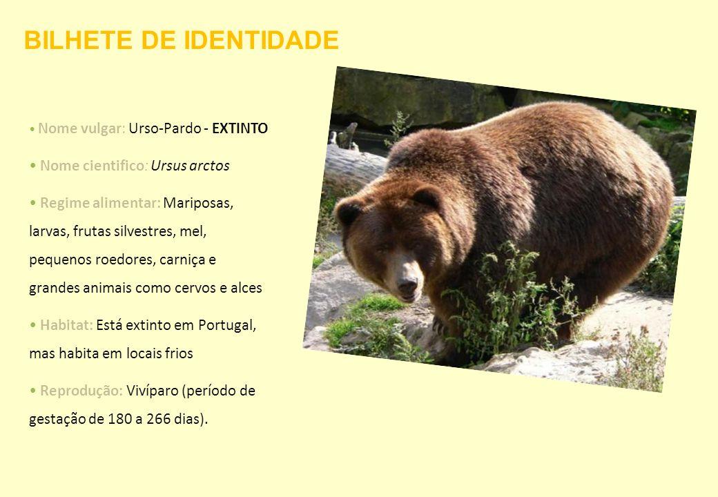 BILHETE DE IDENTIDADE Nome cientifico: Ursus arctos