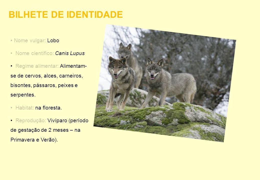 BILHETE DE IDENTIDADE Nome vulgar: Lobo Nome cientifico: Canis Lupus