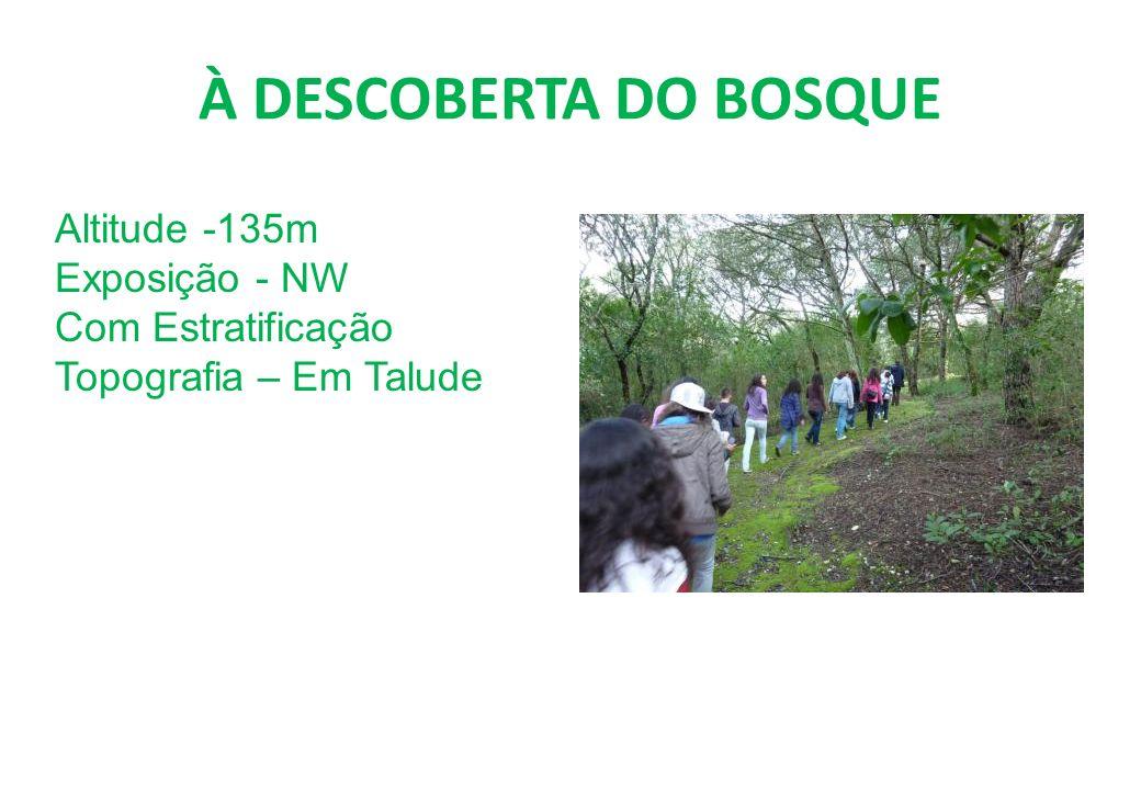 À DESCOBERTA DO BOSQUE Altitude -135m Exposição - NW
