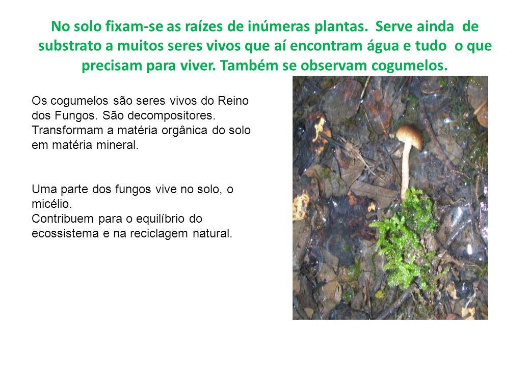 No solo fixam-se as raízes de inúmeras plantas