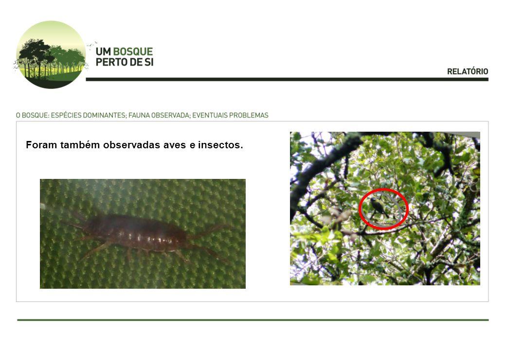 Foram também observadas aves e insectos.