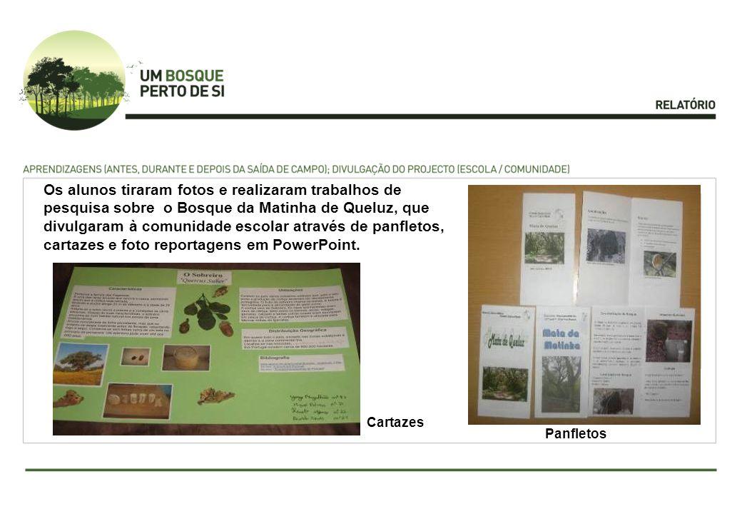 Os alunos tiraram fotos e realizaram trabalhos de pesquisa sobre o Bosque da Matinha de Queluz, que divulgaram à comunidade escolar através de panfletos, cartazes e foto reportagens em PowerPoint.