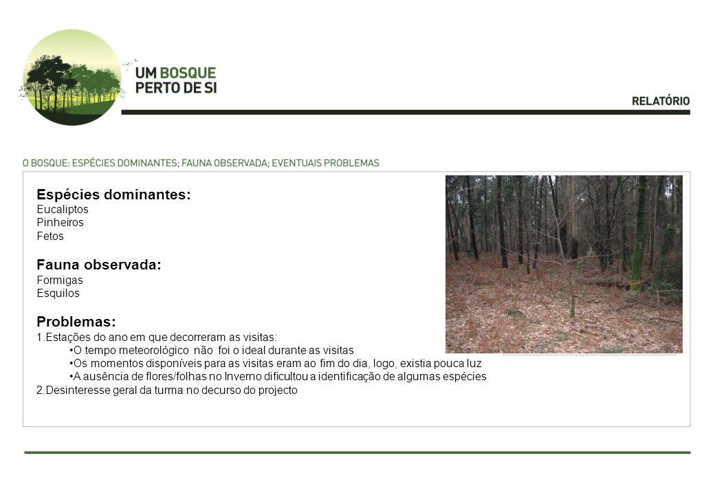 Espécies dominantes: Fauna observada: Problemas: Eucaliptos Pinheiros