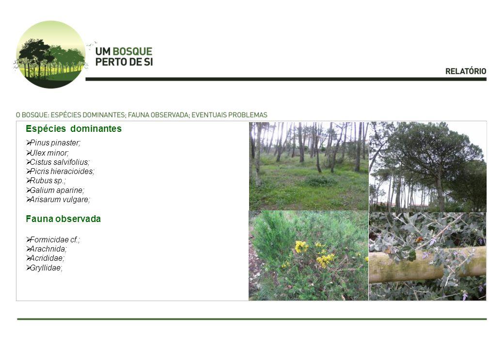 Espécies dominantes Fauna observada Pinus pinaster; Ulex minor;